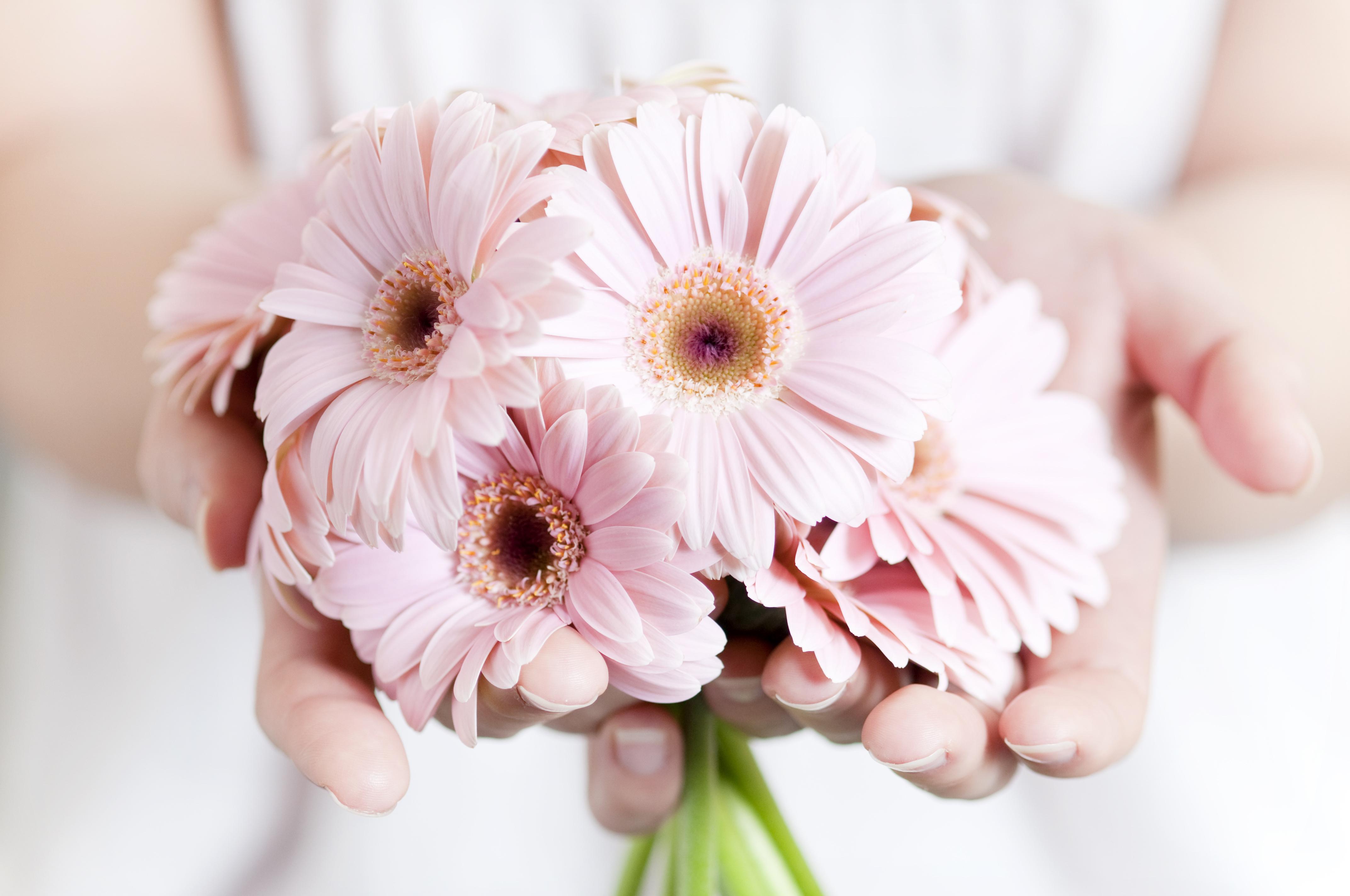 Цветы в руках — Flowers in hands