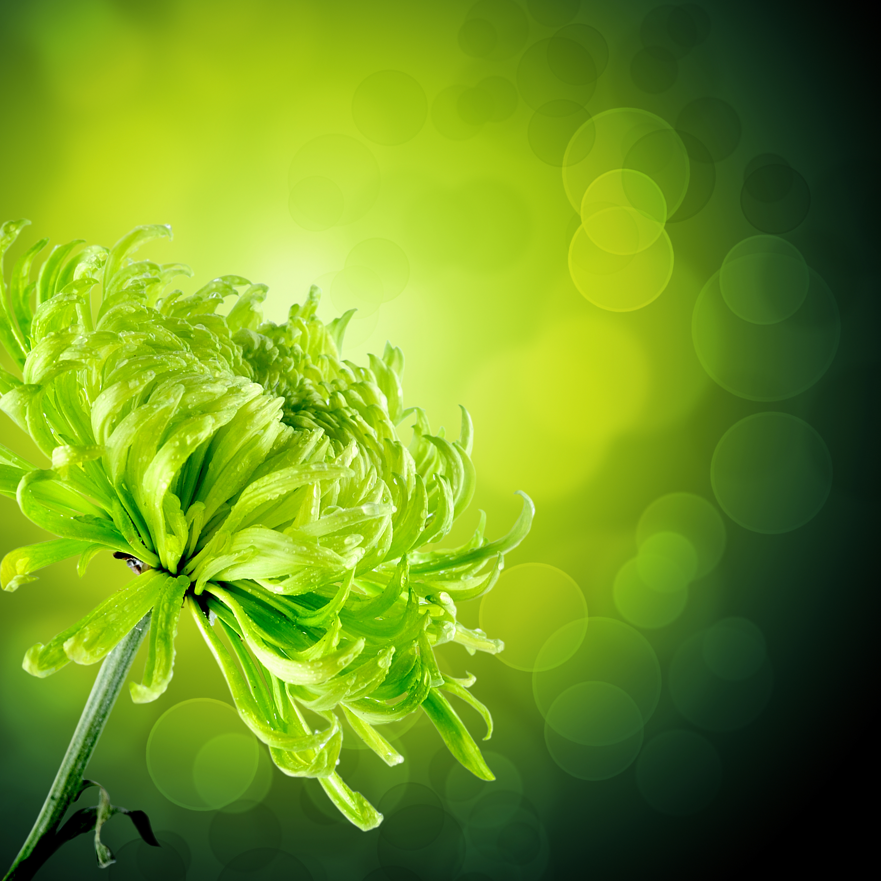 Картинки в желто зеленых тонах