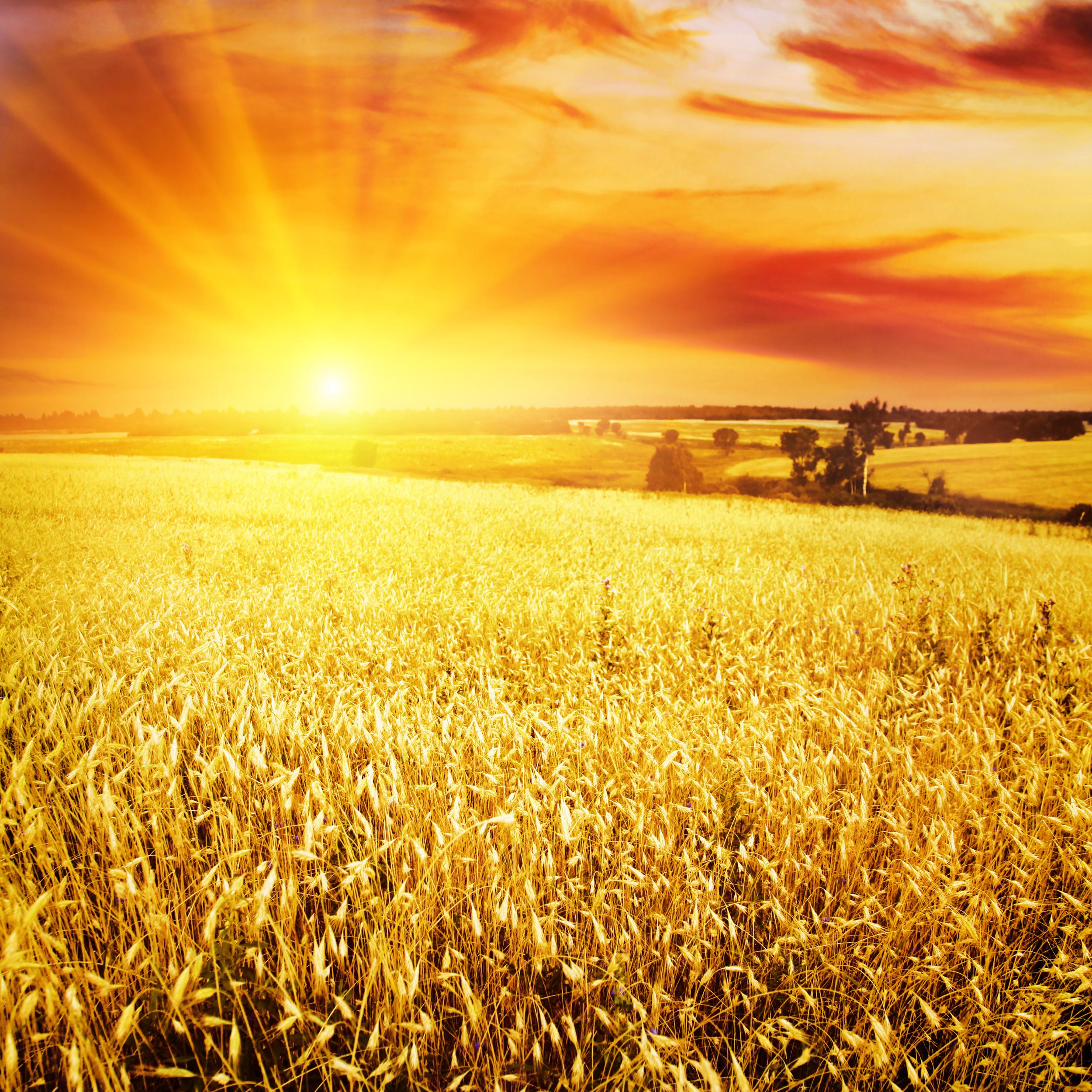 предпочитают картинка рассвет и пшеница удобные стильные, они