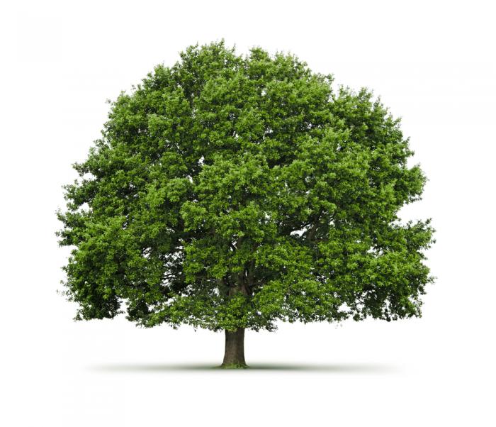 Текстура дерево зеленое