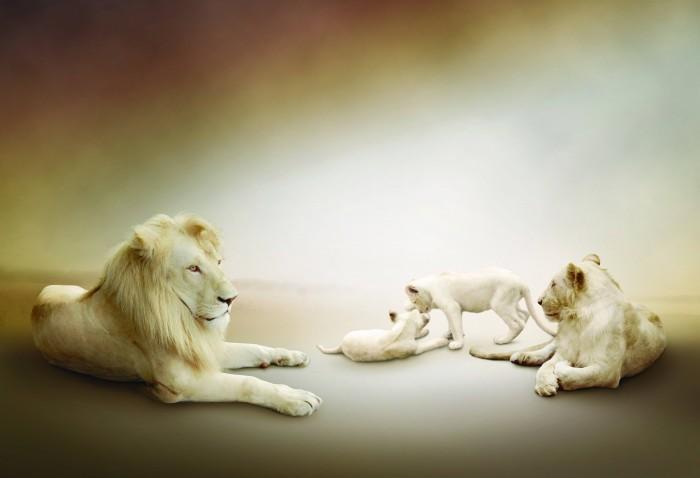 Качественный растровый клипарт с изображением семейства львов.