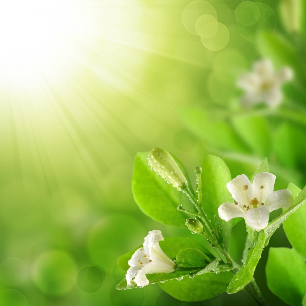 firestock green spring 31072013 1024x1024 Зеленая весна   Green spring