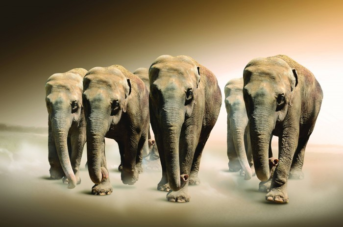 Качественный растровый клипарт с изображением слонов стоящих в ряд.