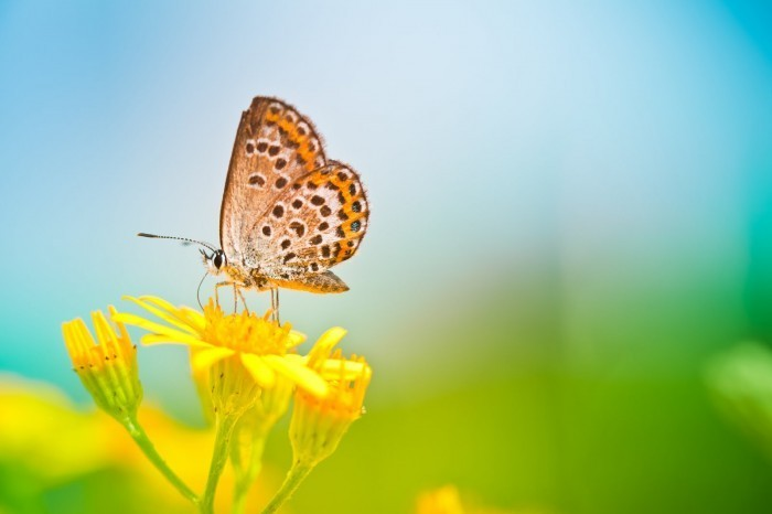 iStock 000015616297Large Бабочка на цветке   Butterfly on a flower