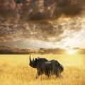 Тема животных, изображение носорога.