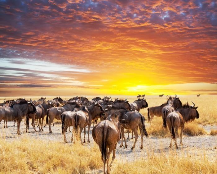 p 568 Стадо антилоп   Herd of antelope
