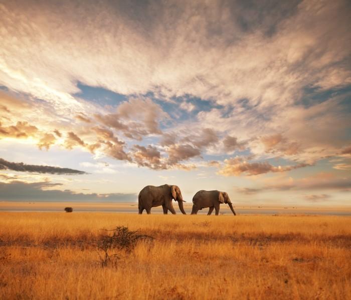 Качественный растровый клипарт с двумя слонами .