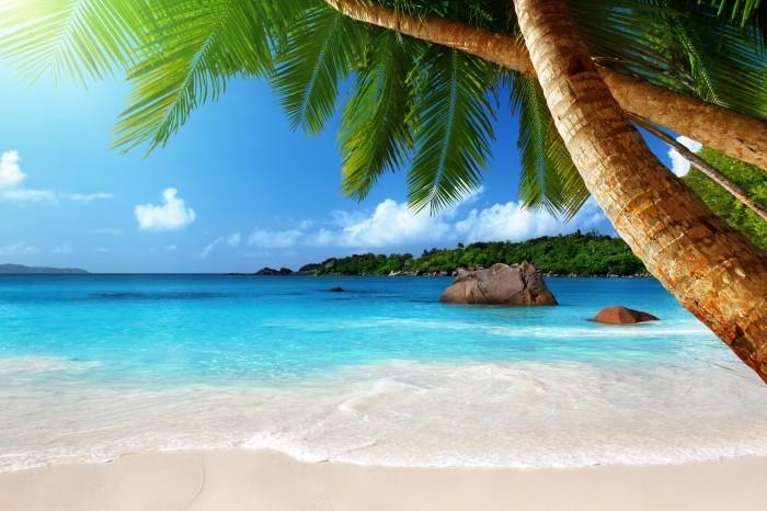 Пальмы - Palms
