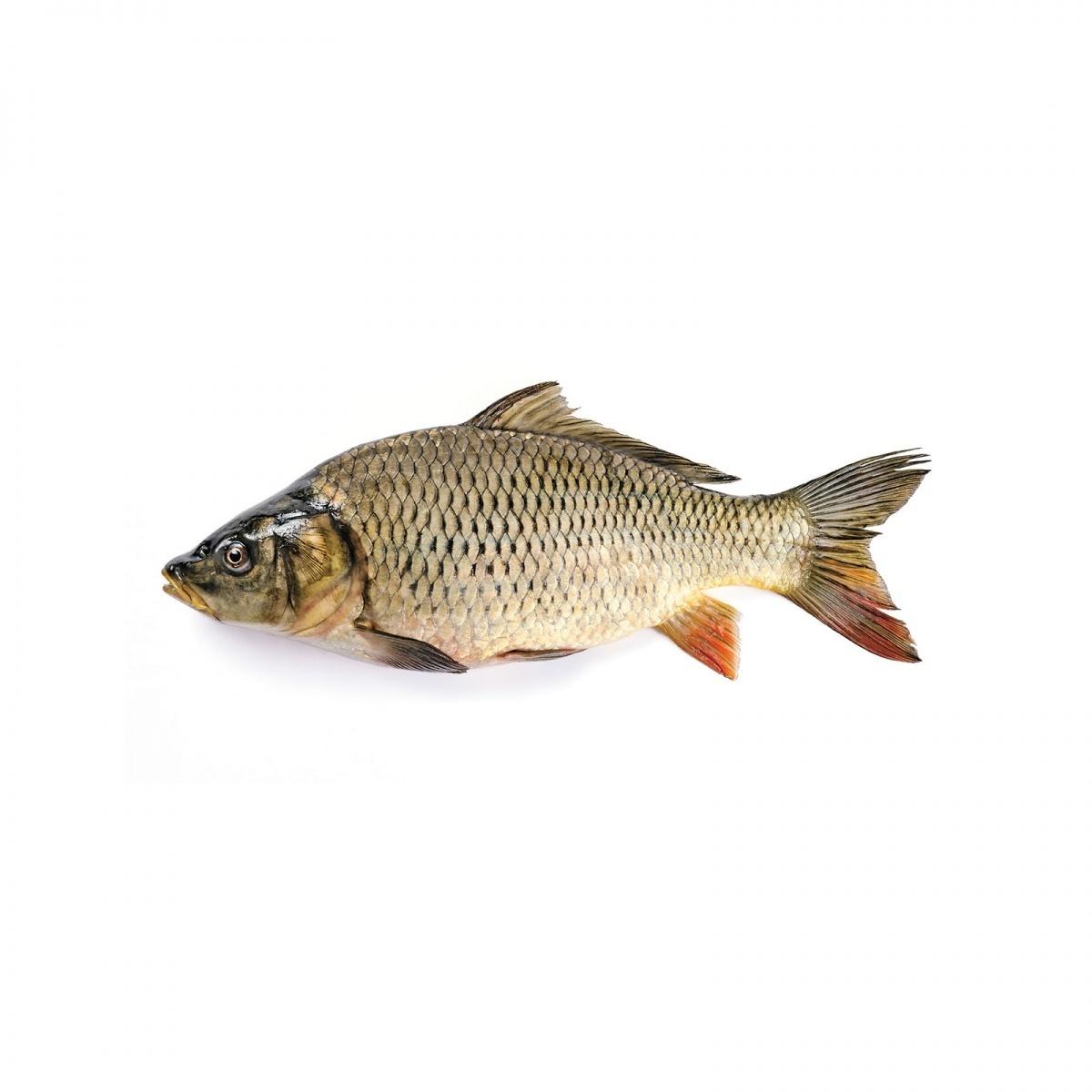 Рыба - Fish