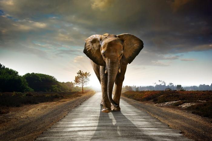 Слон на дороге - Elephant on the road