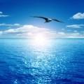 Чайка - Seagull