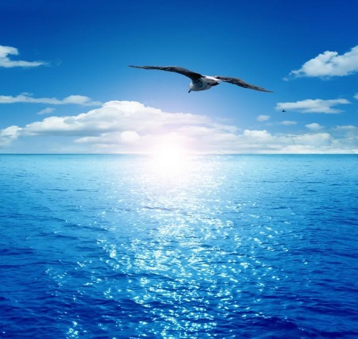 shutterstock 83097187 Чайка   Seagull