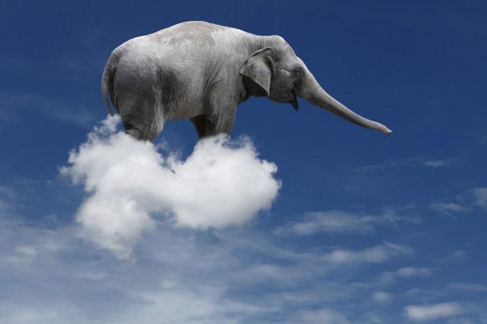 Слон на облаке - Elephant on the cloud