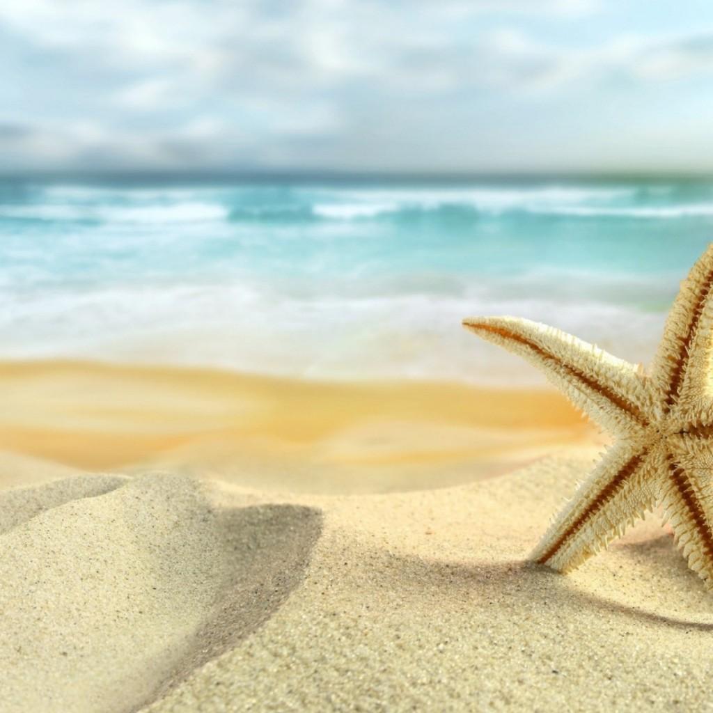 starfish1280x1280 1024x1024 Морская звезда   Starfish