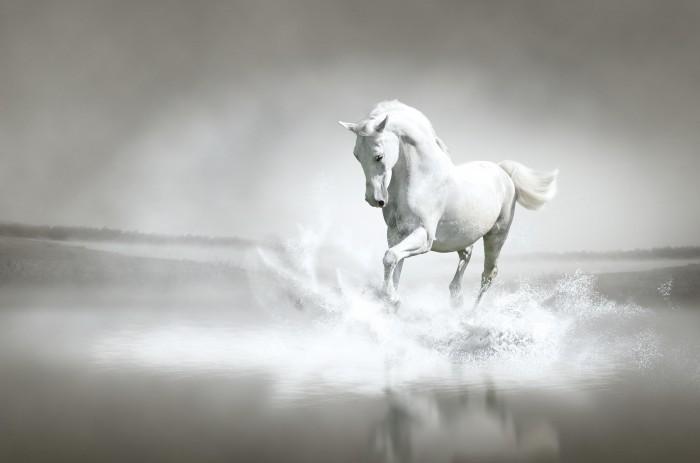 white horse galloping Белая лошадь   White horse