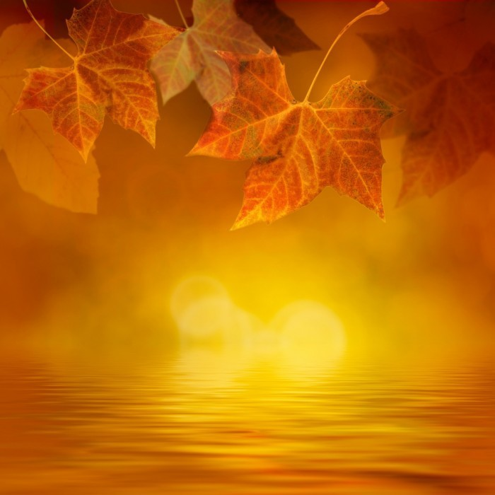 firestock autumn leaves 29082013 700x700 Осень   Аutumn