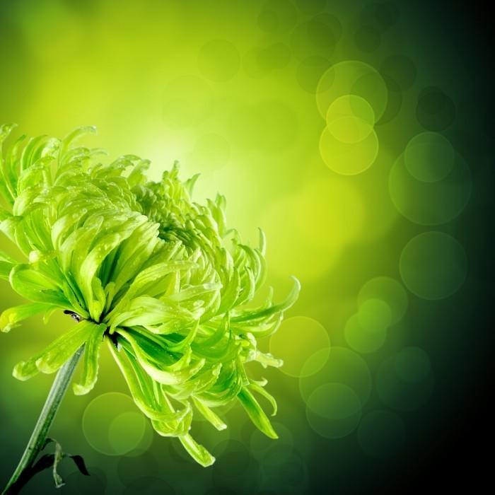 firestock green flowers 29082013 700x700 Цветок   Flower