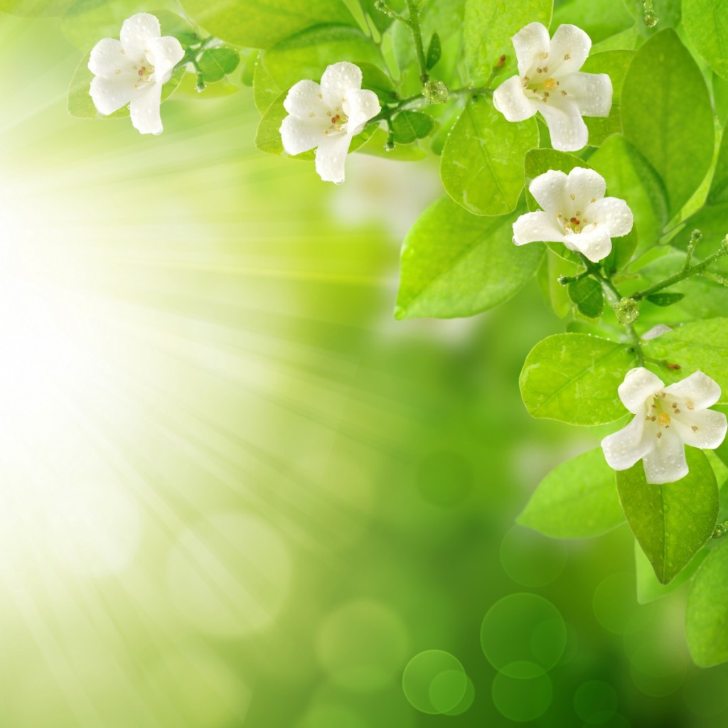 весна картинки: