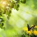 Зеленая весна - Green spring