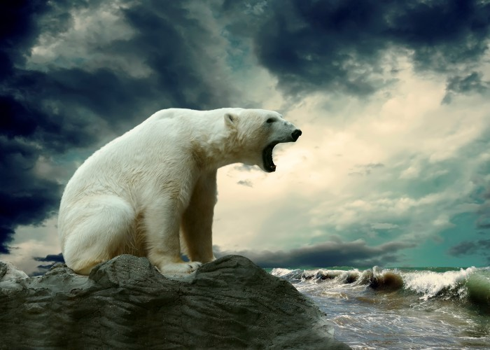 firestock polar bear 03082013 Белый медведь   Polar bear