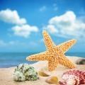 Морская звезда - Starfish