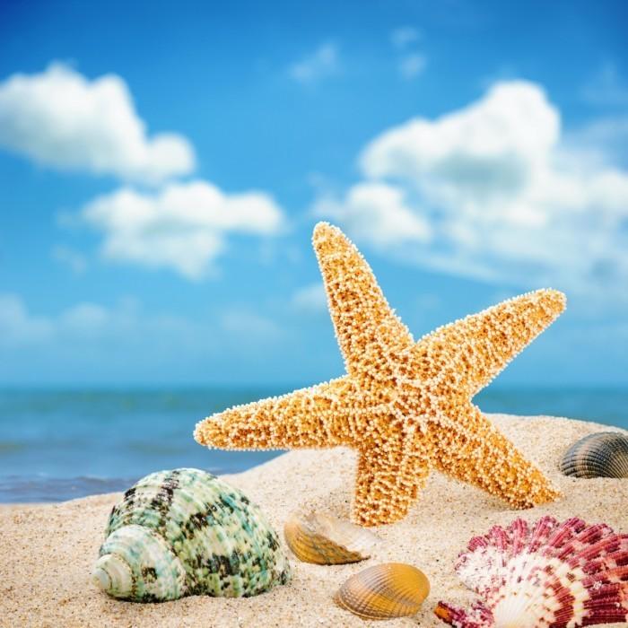 firestock sea star 30082013 700x700 Морская звезда   Starfish