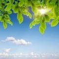 Листочки на фоне неба - Leaflets on a background of the sky