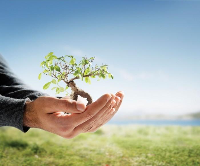 istock 000004633733medium Проросшее дерево в руках   Overgrown tree in hands.