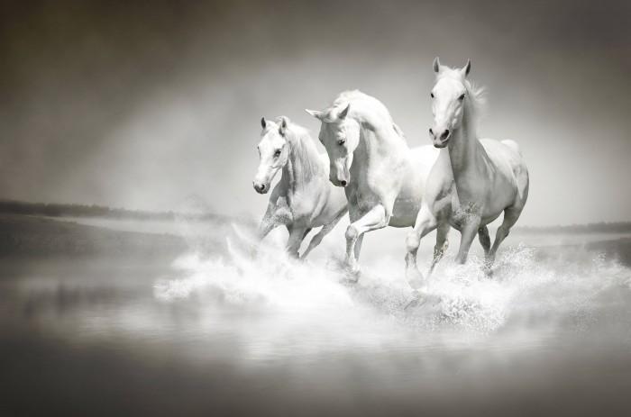 three white horses Белые лошади   White horses