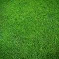 Трава - Grass