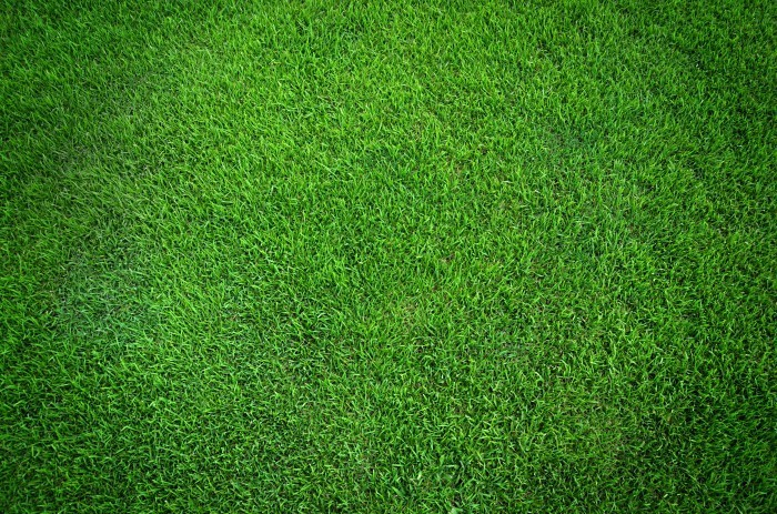 Fotolia 41649201 Subscription Monthly XXL Трава   Grass
