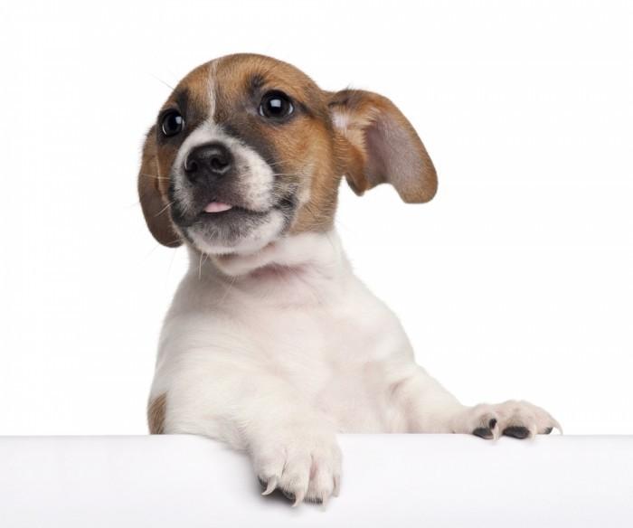 ReallyHappyDog Счастливая собака   Happy dog
