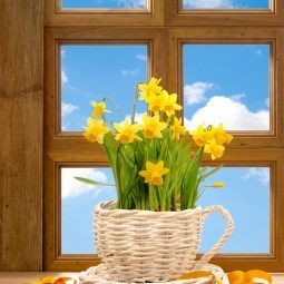 Нарциссы на окне  - Daffodils on the window