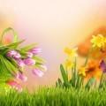 Композиция из цветов - Flower arrangement