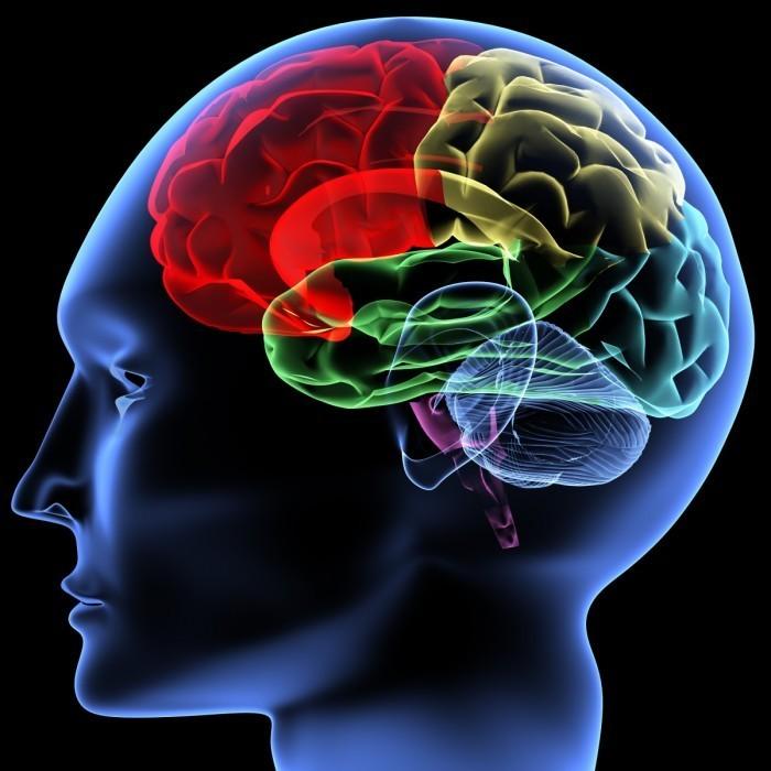human brain 700x700 Мозг   Brain