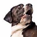 Собака - Dog