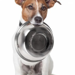 Собака  с миской - Dog with bowl