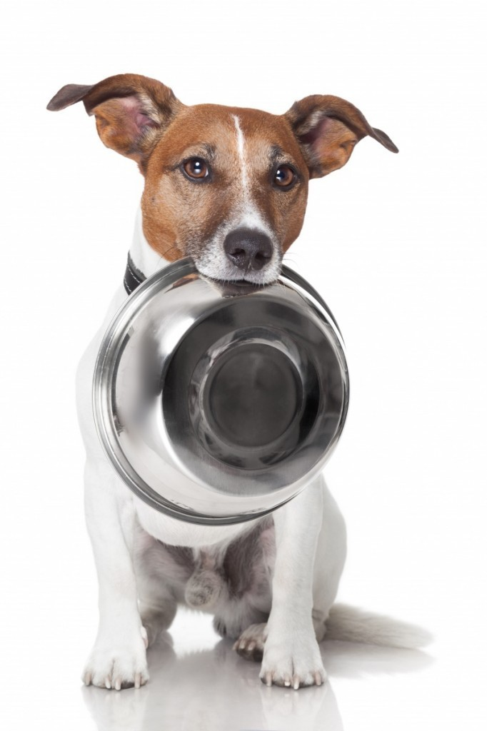 shutterstock 113005285 1 682x1024 Собака  с миской   Dog with bowl