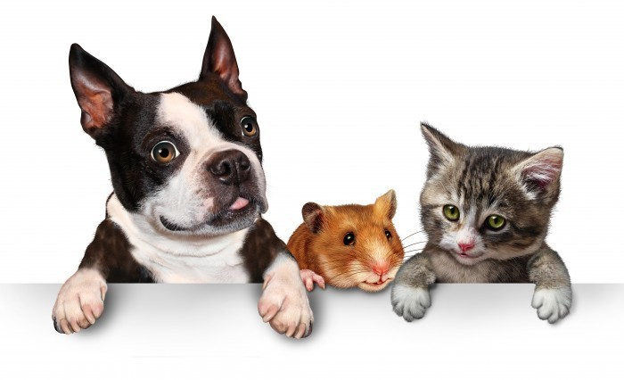shutterstock 143744773 Кот,собака и хомяк   Cat, dog and hamster