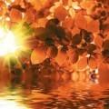 Осень золотая - Autumn gold