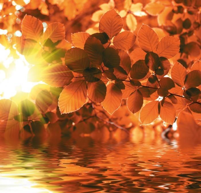 shutterstock 33850555 Осень золотая   Autumn gold