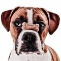 Собака с косточкой - Dog with bone