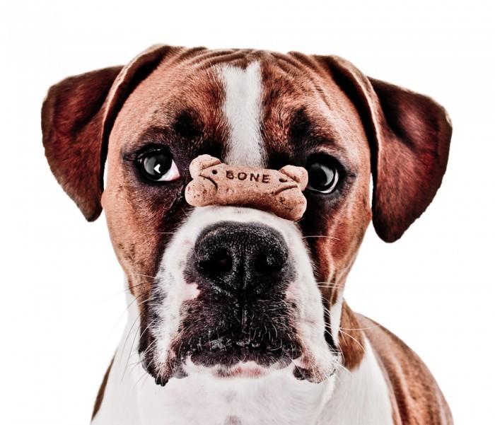 shutterstock 66585331 Собака  с косточкой   Dog with bone