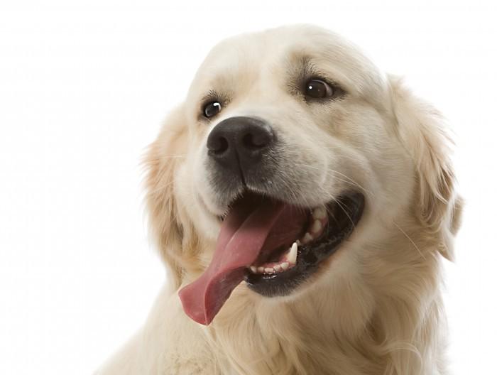 shutterstock 7609546 Собака   Dog