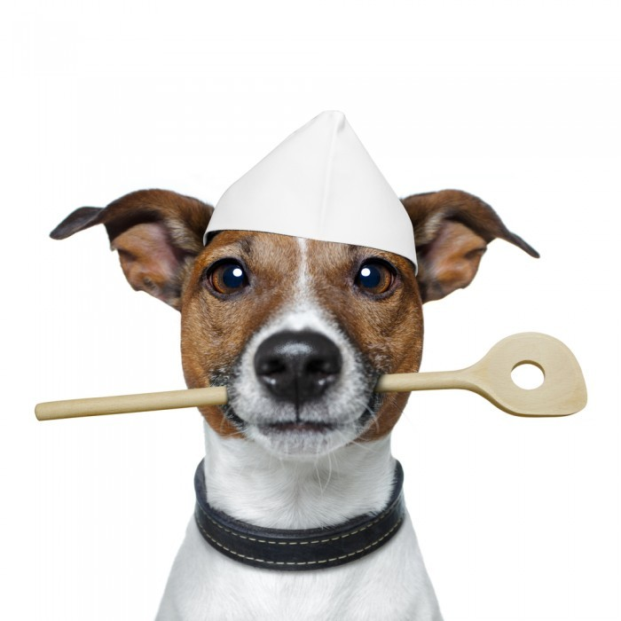 shutterstock 96532105 700x700 Собака повар   Dog chef