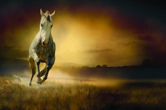 wild horse Дикий конь   Wild horse