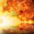 Осенние листья над водой - Autumn leaves over water