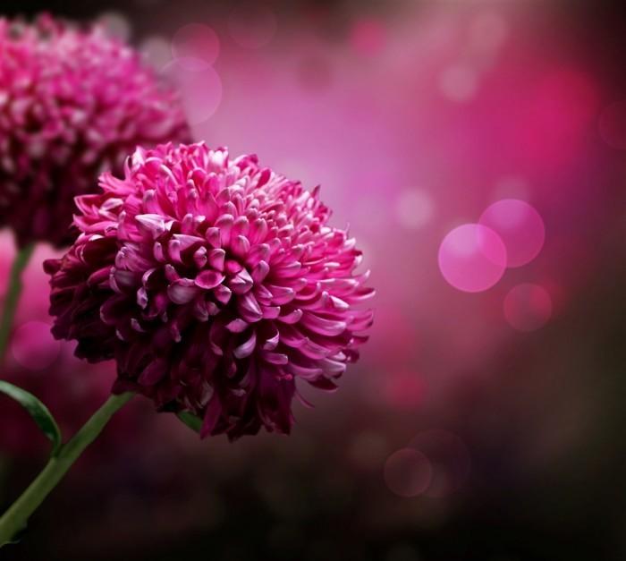 Fotolia 28158442 Subscription XL Сиреневые цветы   Рurple flowers