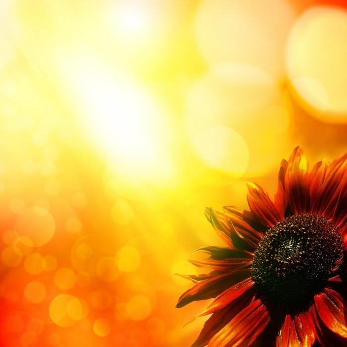 firestock background 08102013 700x700 Цветок   Flower
