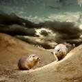 Хомяки - Hamsters